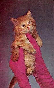 Cat Post Card Glamour Puss Unused
