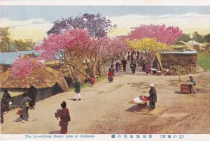 The Five Coloured Cherry Blossoms Arakawa Japan Old Postcard