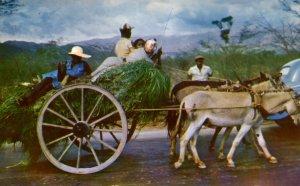 Jamaica - British West Indies - Homeward Bound - in 1967