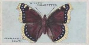 Wills Vintage Cigarette Card British Butterflies No. 16 Camberwell Beauty 1927