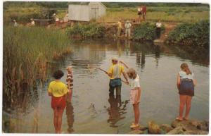 Crab Creek, Dennis, Cape Cod, Mass, unused Postcard