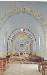 Church of S. Peter's Primacy, 1950-1960s