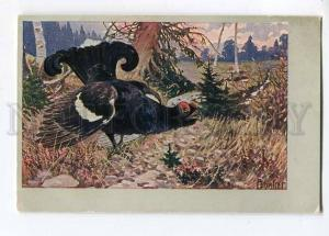 257460 HUNT Bird Capercaillie by ACHLEITNER Vintage PC