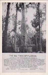 Florida Sanford Thew Big Tree Of Florida