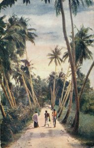 Ceylon Colombo Sunset amongst the Palms 03.93