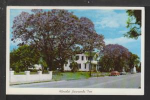 Jacranda Tree,FL Postcard