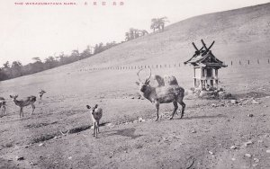 Wakakusayama Mountain Deer Nara Japanese Old Postcard