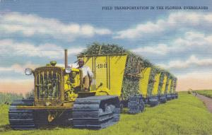 Tractor Field Transportation in the Flordia Everglades, Florida, 30-40s