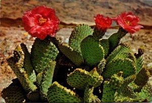Arizona Desert Scene Magenta Beaver Tail Cactus