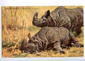 170321 HUNT Indian RHINOCEROS Nashorn by KUHNERT vintage PC