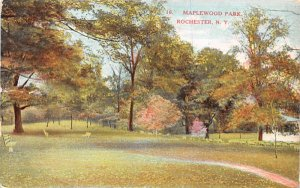 Maplewood Park Rochester, New York Postcard