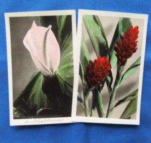 Flowers Postcards Vintage Garden Floral Photos Blossoms White Borders
