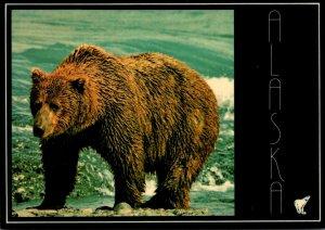 Alaska Alaskan Brown Bear On A Fiishing Expedition