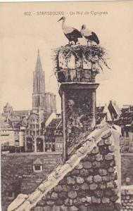 France Strasbourg Nid De Cigognes