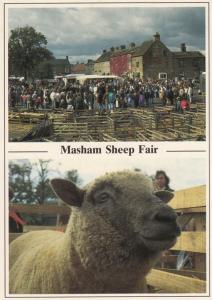 Masham Market Sheep Fair Postcard