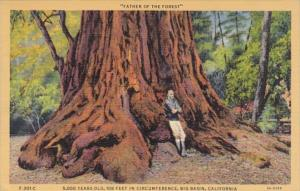 California Big Basin Father Of The Forest 5,000 Year Old Tree 1947 Curteich