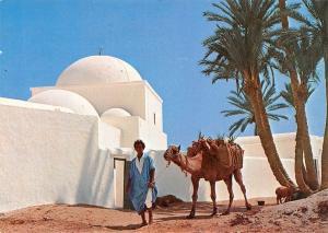 Tunisia Jerba (Tunisie) Camel