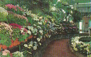 Missouri Saint Louis Spring Flowers Jewel Box Forest Park 1962