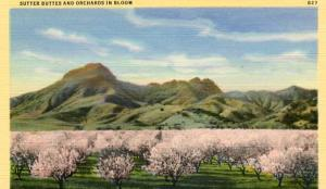 CA - Sutter Buttes, Orchards in Bloom