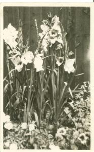Flowers, old used real photo Postcard