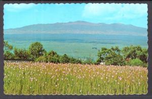 Orchids,Vanda Orchid Fields,Hilo,HI