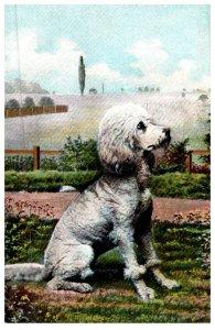 Dog ,Poodle