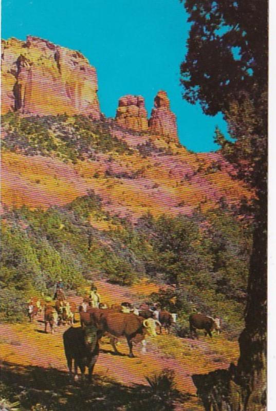 Arizona Oak Creek Canyon Cattle Scene