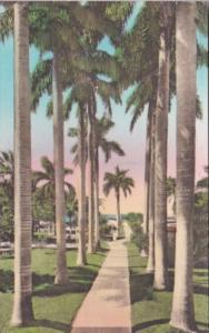 Florida Fort Myers Walk To Pier & Swimming Pool Hotel Royal Palm Handcolored ...
