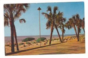 Gently Swaying Palms along the boardwalk at Myrtle Beach, South Carolina, 40-60s