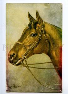 234807 Portrait of HORSE Vintage Salmon Ltd #3353 postcard