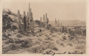 RP: Giant Cactusses , 00-10s