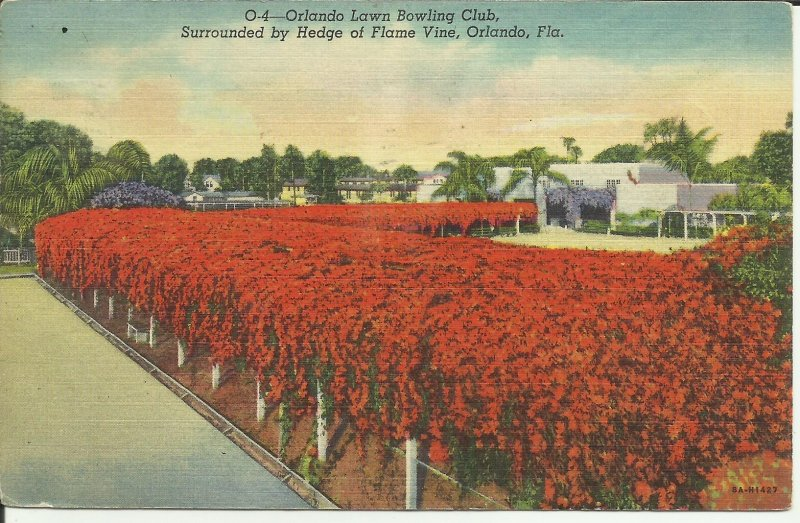 Orlando,Florida, Orlando Lawn Bowling Club, Surrounded By Hedge of Flame Vine