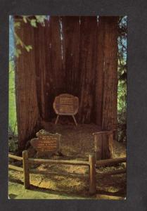 CA Redwood Highway Hwy Trees Cathedral Mystery California Postcard Calif