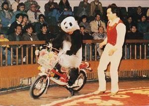 Bears Panda Jiao Jiao On The Motorcycle