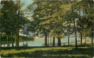 Bloomington Illinois~View In Miller Park~Shade Trees Down Hill~1912 Postcard