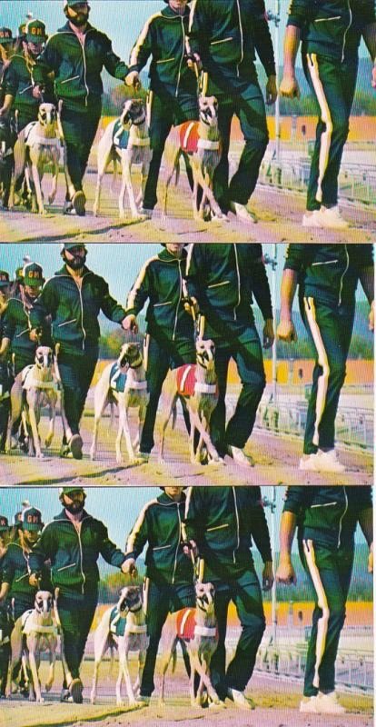 0143 Grabbag Auction 3 Dog Racing Postcards Starting At .99