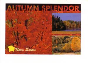 Collage of Maple Trees, Autumn Splendor, Nova Scotia, Photo Dale Wilson, The ...