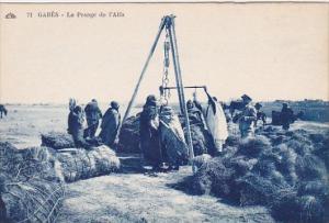 Algeria Gabes Le Pesage de l'Alfa