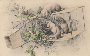 Pigs fly an early Airplane , 1910