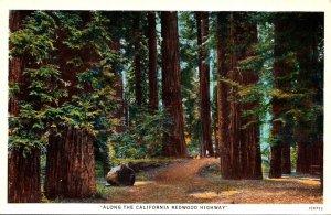 California Scene Along The Redwood Highway
