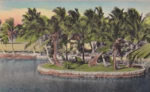 Florida waterway Fringed With Coconut Palm Trees