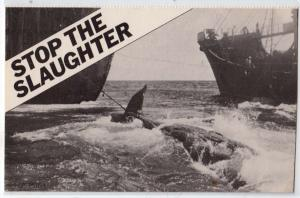 Stop the Slaughter - Whales