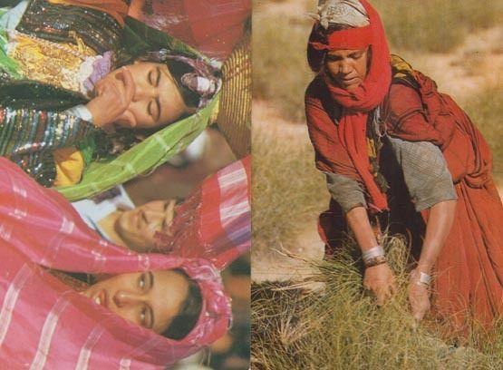 Tunisia Jeunes Filles Du Sud Hay Grass Farming 2x Postcard s