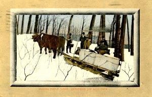 VT - Maple Sugaring. Gathering Sap, Oxen