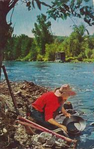 Gold Prospector Panning For Gold