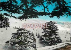 Postcard Modern Lebanon Les Cedres