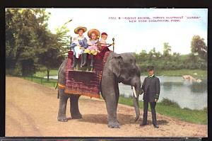 Children Riding the Elephant Gunda NY Zoological Park Now the Bronx Zoo c.1910