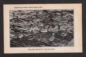 PA Pymatuning Lake PENNSYLVANIA PENN Postcard Ducks