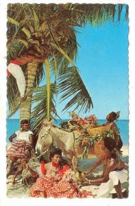Time out to pick refreshing coconuts in Jamaica, W.I. 40-60s