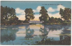 Lily Pond on Presque Isle Peninsula, unused linen Postcard